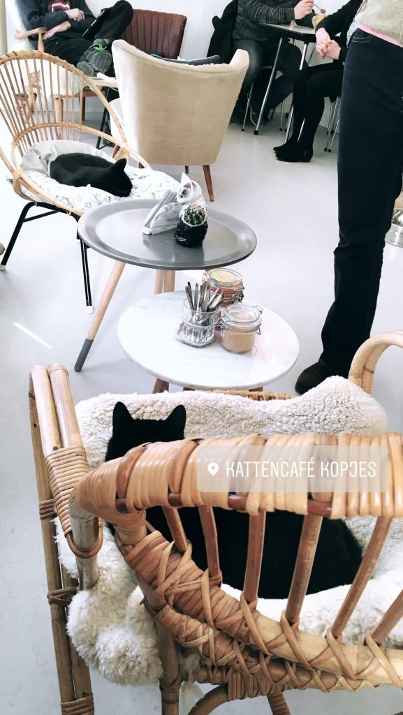 Katzencafe Kopjes Amsterdam Kattenkopjes Niederlande cafe essen Müsli Katzen